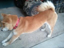 犬が背伸び