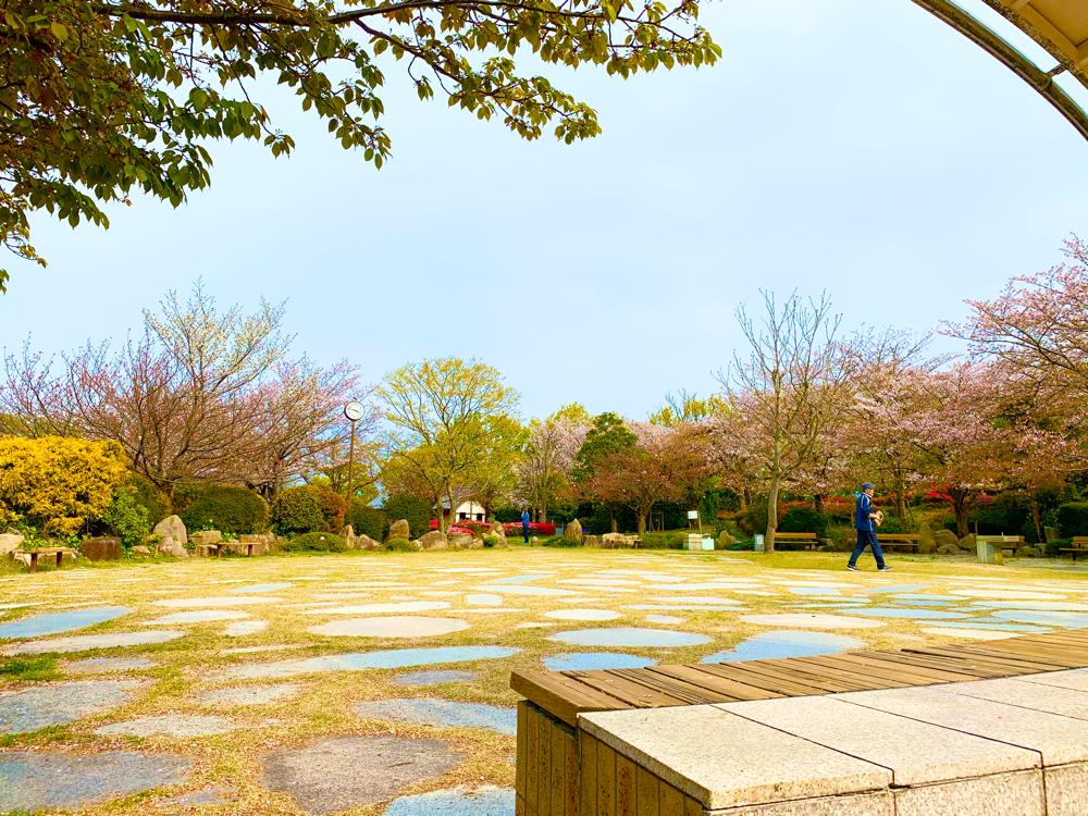 松山総合公園の花見広場