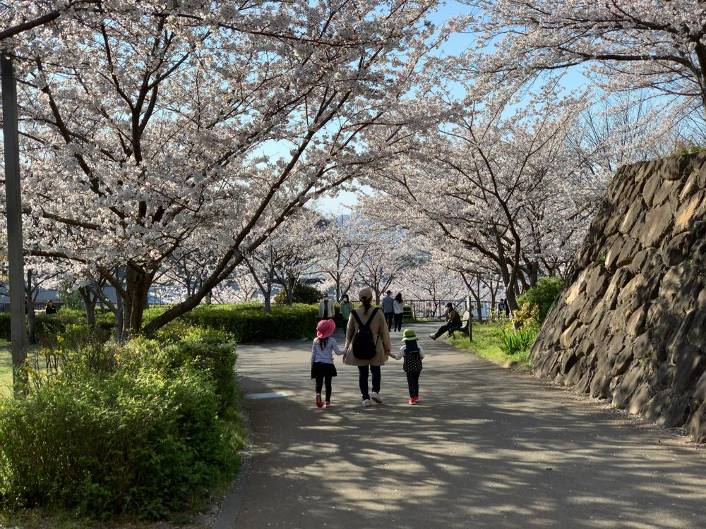 さくらの丘の桜